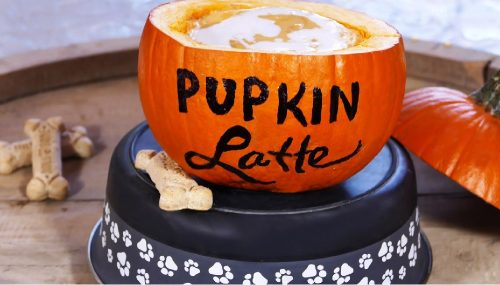 Pumpkin Spiced Latte and More!